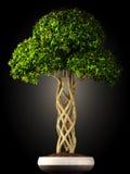 Vista laterale dell'albero dei bonsai Fotografie Stock