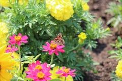 Vista laterale di ammiraglio rosso Butterfly Fotografie Stock Libere da Diritti