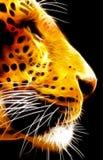 Vista laterale isolata neon VB del fronte del leopardo del primo piano Fotografia Stock Libera da Diritti