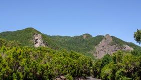 Vista lejana a un bosque con las rocas imagenes de archivo