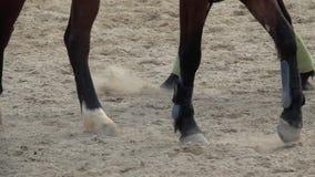 Vista lenta della pentola sugli zoccoli dei cavalli che passano un campo polveroso archivi video