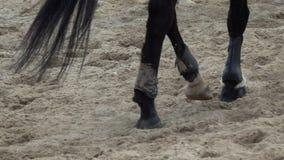 Vista lenta della pentola sugli zoccoli dei cavalli che passano un campo sabbioso video d archivio