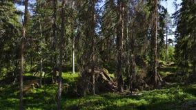 Vista lindo do monte rochoso da floresta com os pinheiros verdes no fundo do c?u azul vídeos de arquivo