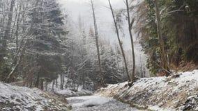 Vista lindo do rio de fluxo rápido com espuma criadora atual da velocidade na floresta de surpresa do inverno com árvores panoram filme