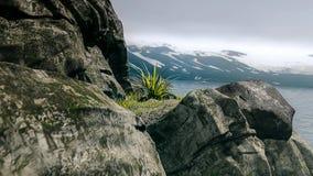 Vista luminosa della costa di estate in ANTARTIDE fotografia stock