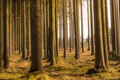 Vista mágica del bosque y de árboles durante la puesta del sol Luz suave y colores místicos, tronco de árbol e hierba del otoño imagen de archivo