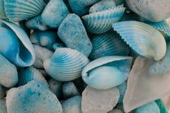 Vista macra de conchas marinas Fondo del Seashell Textura de conchas marinas azules fotos de archivo libres de regalías