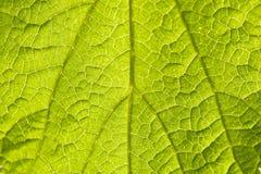 Vista macra de la hoja verde Foto de archivo libre de regalías