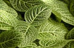 Vista macra de la planta tropical de las hojas Foto de archivo libre de regalías