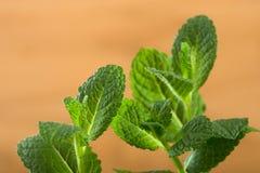 Vista macra de las hojas de menta fresca foto de archivo libre de regalías