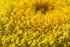 Vista macra de las semillas de girasol del colorfull Imagenes de archivo