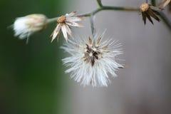 Vista macra de una pequeña flor blanca fotos de archivo libres de regalías