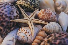 Vista macra del fondo de la concha marina Estrellas de mar en fondo de los seashells Muchas diversas conchas marinas textura y fo Fotografía de archivo