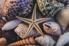 Vista macra del fondo de la concha marina Estrellas de mar en fondo de los seashells Muchas diversas conchas marinas textura y fo Imagenes de archivo