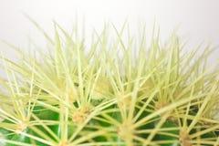 Vista a macroistruzione di un cactus di barilotto Immagine Stock Libera da Diritti
