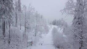 Vista magica del terreno boscoso nevoso video d archivio