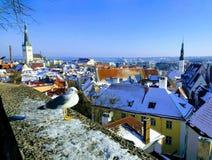 vista magica di vecchia Tallinn durante 100 anni di Estonia& x27; indipendenza di s Fotografia Stock Libera da Diritti