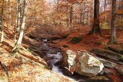 Vista magnífica da cachoeira em Autumn Beech Forest dentro imagens de stock
