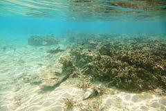 Vista magnífica del mundo subacuático Los arrecifes de coral muertos, la hierba del mar, la arena blanca y la turquesa riegan El  Fotografía de archivo libre de regalías