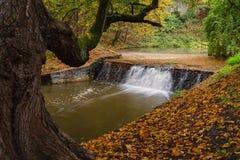 Vista majestosa da cascata no parque bonito czech europa Cena incomum dramática Mundo bonito Colorfull Imagem de Stock