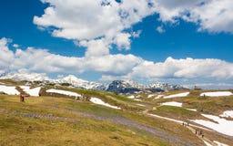 Vista majestosa de açafrões de florescência da mola nas montanhas Fotografia de Stock