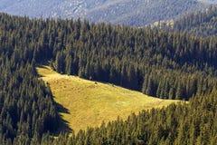 Vista majestuosa del prado soleado hermoso en las montañas cárpatas, cubierta denso con los abetos bosque, Ucrania Soleado brilla fotos de archivo