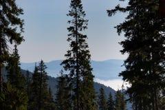 Vista meravigliosa delle montagne di Carpathians con l'alta priorità alta delle conifere Montagne della foresta con le nuvole e l immagini stock libere da diritti