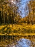 Vista meravigliosa riflessione dell'albero e dell'erba in un lago nel parco immagini stock libere da diritti