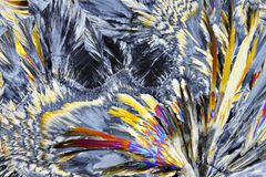 Vista microscópica de los cristales de la sucrosa en luz polarizada Foto de archivo libre de regalías
