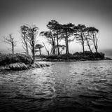 Vista monocromatica drammatica degli alberi nel lago Immagine Stock