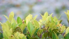 Vista movente horizontal das folhas verdes na árvore filme