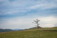Vista na árvore de larício no estepe do Lago Baikal fotografia de stock royalty free