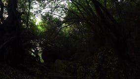 Vista na escadaria de pedra e em câmera movente em árvores filme
