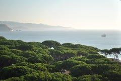 Vista na floresta do pinho e no mar Mediterrâneo imagem de stock