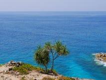 Vista na palma só e no oceano Imagens de Stock