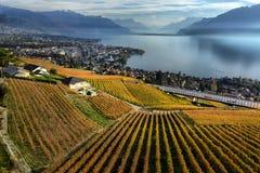 Vista na região de Lavaux no dia do outono, Vaud, Suíça fotos de stock royalty free