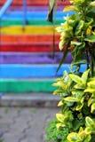 A vista nas escadas do arco-íris com a planta no primeiro plano Imagem de Stock
