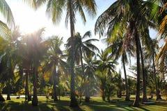 A vista nas palmeiras do coco em um fundo de um céu azul Foto de Stock Royalty Free