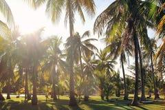 A vista nas palmeiras do coco em um fundo de um céu azul Foto tonificada Foto de Stock