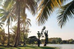 A vista nas palmeiras do coco próximo a um lago em um fundo de um céu azul Foto tonificada Foto de Stock