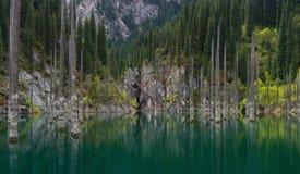Vista natural de Kazajistán del sur en montañas del Tyan-Shan - lago alpino Kaindy también conocido como el lago birch o ForestTh Imagenes de archivo