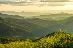 Vista naturale del paesaggio del campo di tithonia diversifolia sulla montagna Fotografie Stock Libere da Diritti
