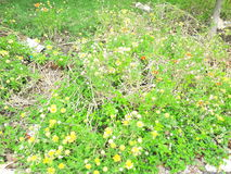 Vista naturale di bellezza del vergine del giardino Immagini Stock