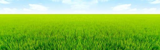 Vista naturale di interurbana del giacimento del riso Immagine Stock Libera da Diritti