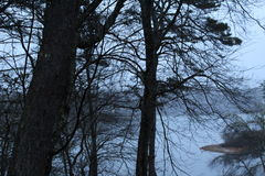 Vista nebbiosa del lago Immagini Stock Libere da Diritti