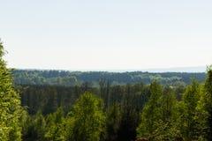 Vista nebbiosa della foresta Fotografie Stock