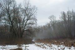 Vista nebbiosa della foresta di inverno Immagine Stock