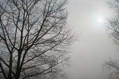 Vista nebbiosa di mattina con il sole e le siluette nere dell'albero Fotografia Stock