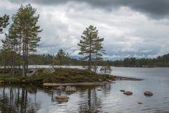 Vista nel lago della foresta immagine stock