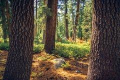 Vista nella foresta Immagini Stock